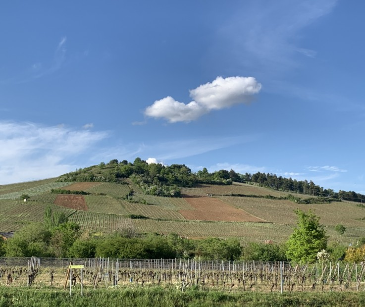 Grand Cru Altenberg de Bergheim